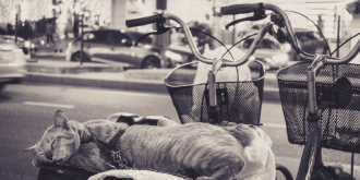 A Cat on a Bike: How to Speed Up Vocabulary Learning